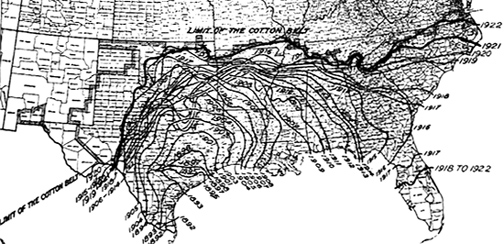 Boll weevil map, 1892, 1922, USDA
